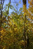 Sunbeams through indian summer forest trees leaves. At south germany countryside stock image