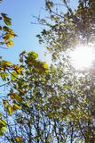 Sunbeams through indian summer forest trees leaves. At south germany countryside royalty free stock images