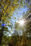 Sunbeams through indian summer forest trees leaves. At south germany countryside stock images