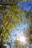 Sunbeams through indian summer forest trees leaves. At south germany countryside royalty free stock photography