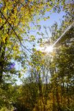 Sunbeams through indian summer forest trees leaves. At south germany countryside stock photography