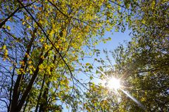 Sunbeams through indian summer forest trees leaves. At south germany countryside royalty free stock image