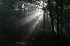 sunbeams leśnych obrazy stock