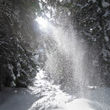Sunbeams lighten falling snow Stock Photos