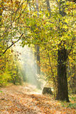 Sunbeams lit footpath in autumn forest Stock Images