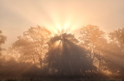 Sunbeams in misty morning Royalty Free Stock Photography