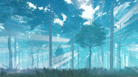 Sunbeams in misty pine forest Royalty Free Stock Photo