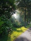 Sunbeams in the morning through the trees in Nieuwerkerk aan den IJssel.  stock photos