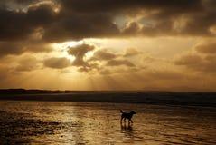 Sunbeams na praia de Cymryan imagem de stock