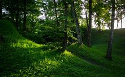 Sunbeams in Natural Woodland Stock Photo