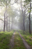 Sunbeams over path in green forest Royalty Free Stock Images