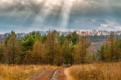 Sunbeams over rural road near autumn dry trees forest Royalty Free Stock Image
