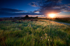 Sunbeams over swamps Royalty Free Stock Photos