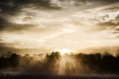 Sunbeams, fog, winter forest royalty free stock image