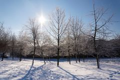 Sunbeams passing through branches in beautiful romantic snowy landscape, trees shadows on ground, sunny winter day. Weather forecast, snowy christmas concept royalty free stock image