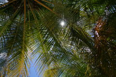 Sunbeams peak through palm trees on Caribbean beach. Looking upwards through the palm leave canopy at the bright sun above and blue sky Stock Photos