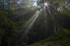 Sunbeams penetruje las zdjęcia royalty free