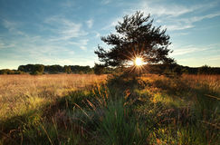 Sunbeams through pine tree on marsh Stock Photos