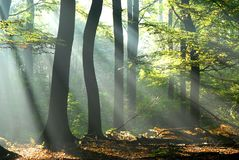 Sunbeams pour into an autumn forest Stock Photo