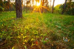 Sunbeams Pour Through Trees In Summer Spring Royalty Free Stock Image