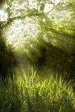 Sunbeams que brilham através de uma parte superior da árvore Fotografia de Stock Royalty Free