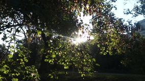 Sunbeams stock video