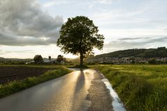 Sunbeams are reflected in the wet street after a strong thunderstorm. In Switzerland Stock Photography