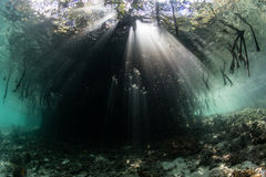 Sunbeams and Shadows in Mangrove Forest Stock Photo