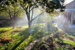 Sunbeams shine through autumn trees. On a cottage garden royalty free stock photo