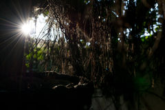 Sunbeams shining through the branches and leaves, the suns rays through the dry branches of tree. scene with feeling of hope Stock Images