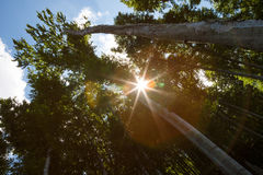 Sunbeams shining through the branches Royalty Free Stock Image