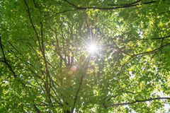 Sunbeams shining through the leaves of a tree Royalty Free Stock Images