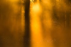 Sunbeams shining through the mist Royalty Free Stock Photography