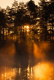 Sunbeams shining through the misty forest Royalty Free Stock Photos