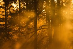 Sunbeams shining through the woods Royalty Free Stock Photo