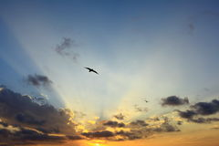 Sunbeams into sunset sky with bird flying Royalty Free Stock Photo