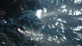 Sunbeams in strong fog in the forest, Poland. stock video footage