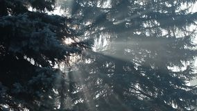 Sunbeams in strong fog in the forest, Poland. Sunbeams in strong fog in the forest, Poland stock footage