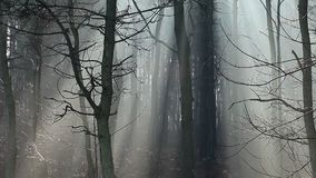 Sunbeams in strong fog in the forest, Poland stock video