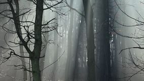 Sunbeams in strong fog in the forest, Poland. Sunbeams in strong fog in the forest, Poland stock video footage