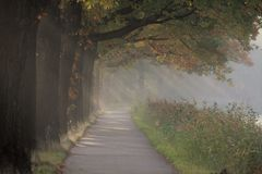Sunbeams. And trees on a road on a autumn day stock photo