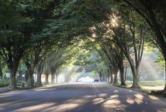 Sunbeams and sunbursts through trees. Sunbeams and sunbursts break through the tree lined street Royalty Free Stock Image
