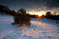Sunbeams at sunset over forest in snow Royalty Free Stock Photography