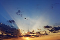 Sunbeams in sunset sky with seagull flying royalty free stock photo