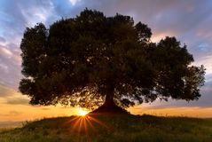 Sunbeams at sunset in Tuscany. Sunbeams shining below a lonely tree on a hill in Tuscany at sunset stock photography