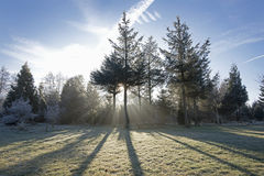 Sunbeams synklina las Obraz Royalty Free