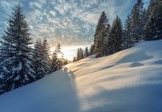 Sunbeams thtough tree at winter mountain meadow. In austria Stock Image