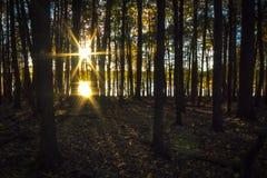 Sunbeams till och med treesna Arkivbilder