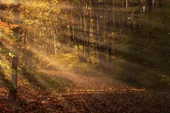 Sunbeams and trail Stock Images