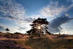 Sunbeams through tree on dunes Royalty Free Stock Image